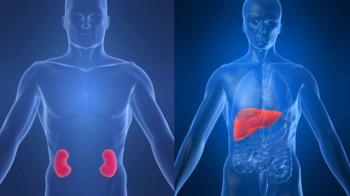 Клиническая больница «А-Clinic Moskow» приглашает доноров. - 5_8_2_1_-KidneyLiver.jpg